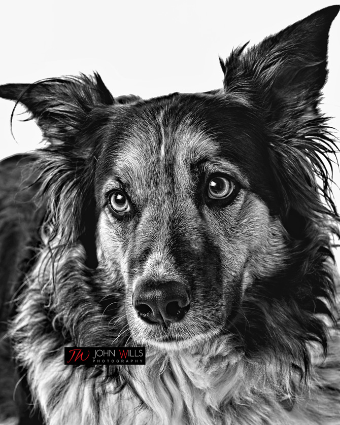 Pet Photographers in Kitchener