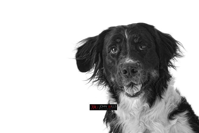Kitchener Pet Photographers