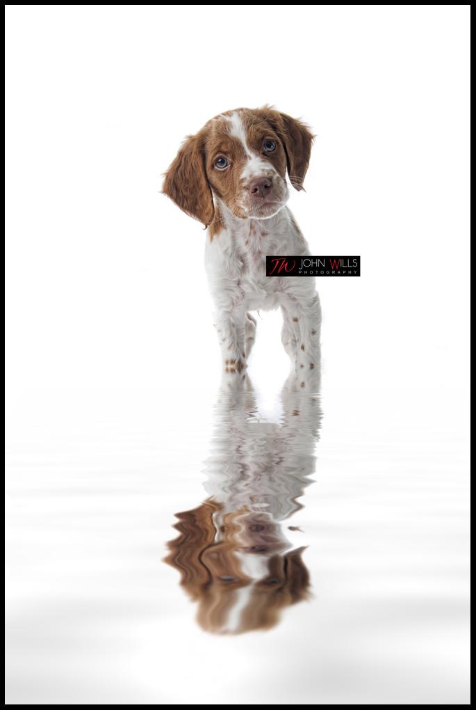 Puppy Portrait Photographers