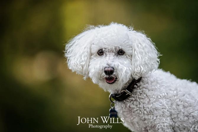 Guelph Pet Photographers