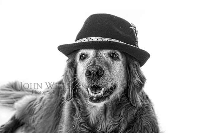 Pet Photography Studios Guelph